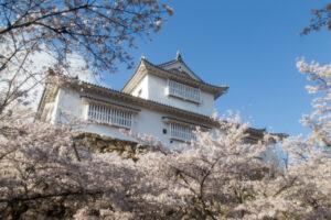 2014年4月5日 津山さくらまつり (鶴山公園にて)